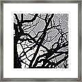 Goth Tree Framed Print