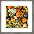 Gourdgeous Framed Print by Kevin Fortier