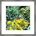 Graceful Butterfly Framed Print by Jose Lopez
