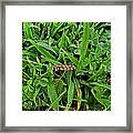 Grass Drops II Framed Print