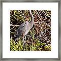 Great Blue Heron And Turtle Framed Print