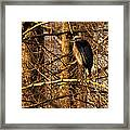 Great Blue Heron At Dusk Framed Print