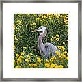 Great Blue Heron In The Flowers Framed Print