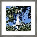 Great Blue Heron Meditation Pacific Northwest Framed Print