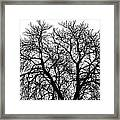 Great Old Tree Framed Print