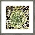 Green Alga, Sem Framed Print by Steve Gschmeissner
