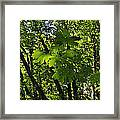 Green Canopy Framed Print