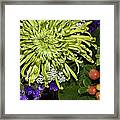 Green Spider Mum Framed Print