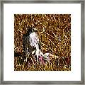 Guarding The Kill Framed Print