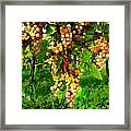 Hanging Grapes On The Vine Framed Print by Elaine Plesser