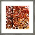Happy Tree Framed Print