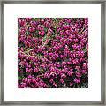 Heather 'nathalie' Flowers Framed Print