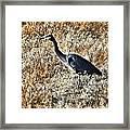 Heron On The Hunt Framed Print