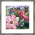 Hibiscus Seductris Framed Print