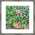 Hitchin A Ride On A Turtle  Framed Print