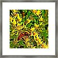 Honey Bee And Sedum  Framed Print