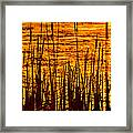 Horicon Cattail Marsh Wisconsin Framed Print