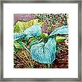 Hosta Framed Print by Peter Sit