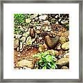 Human N A Duck Framed Print