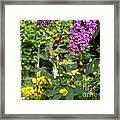 Hummingbird Moth In Flight  Framed Print