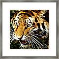 Hungry Tiger Framed Print