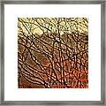 Hungry Vines Framed Print