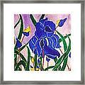 Hybrid Iris Framed Print