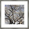 Ice Covered Tree At Sunrise Framed Print
