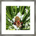 Icy Pine 1 Framed Print