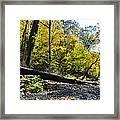 If A Tree Falls Framed Print