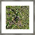 Iguana Hiding In The Bushes Framed Print