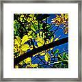 Illuminated Elm Leaves Framed Print