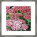 In A World So Small Framed Print