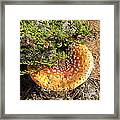 In Autum Forest Framed Print