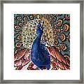 India: Peacock Framed Print