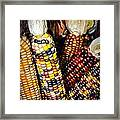 Indian Corn 2 Framed Print