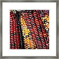 Indian Corn Framed Print