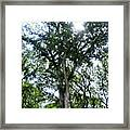 #instadroid #andrography #nexuss #tree Framed Print