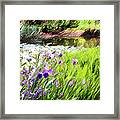 Iris And Water Framed Print