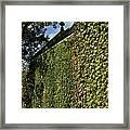 Ivy Covered Chapel Framed Print