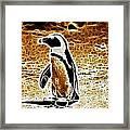 Jackass Penguin  Framed Print