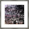 Jammer Cotton Candy Trees Framed Print