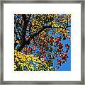 Jewels Of Autumn Framed Print