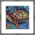 Joe Turtle Framed Print