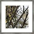 Juvenile Snowy Egret Framed Print