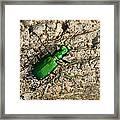 Keen Green Framed Print