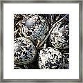 Killdeer Eggs 2 Framed Print
