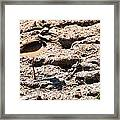 Killdeer Pitching A Fit Framed Print