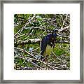 Kissimmee Bird 2 Framed Print