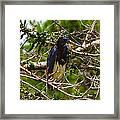 Kissimmee Bird Framed Print